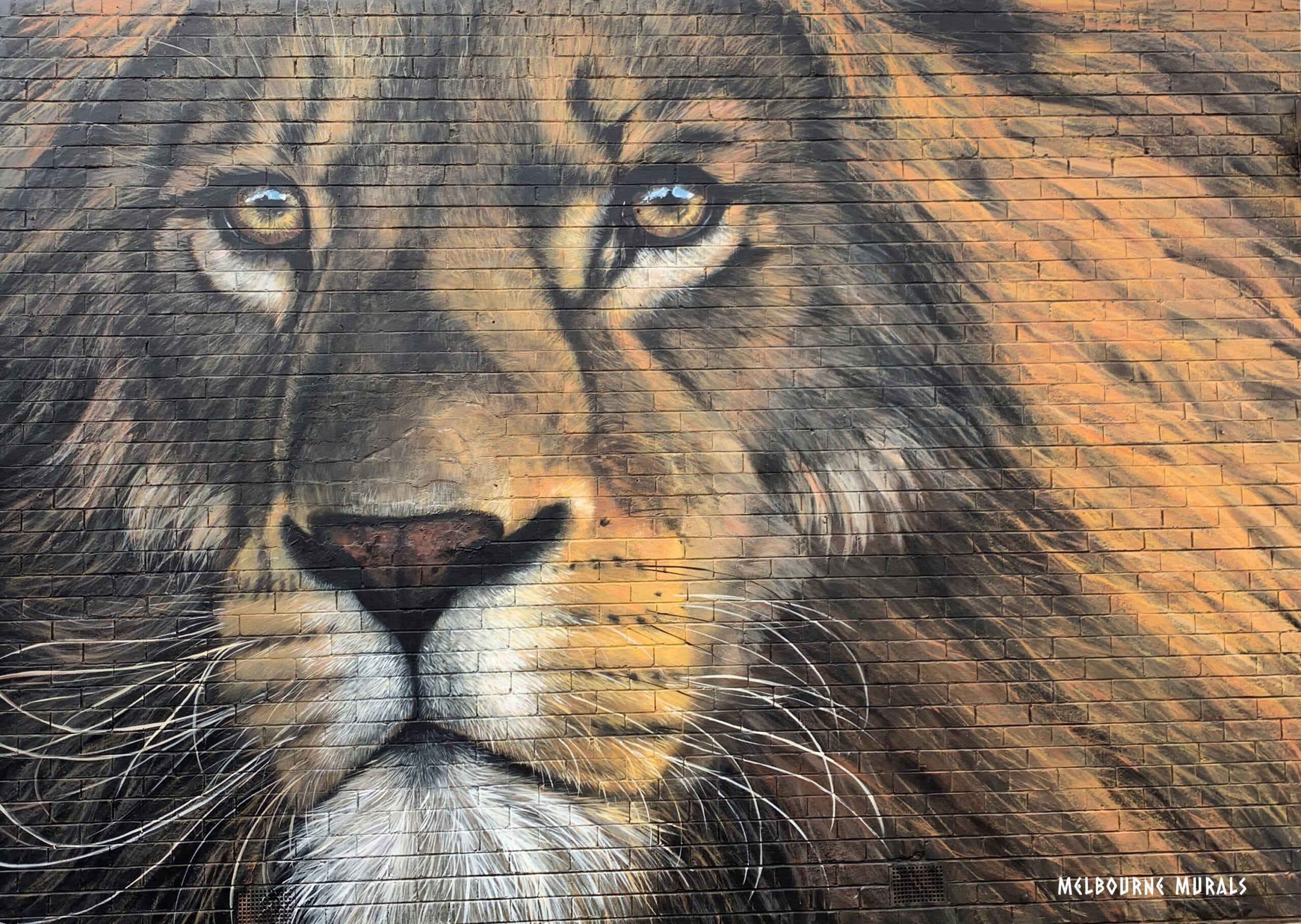 @melbournesmurals - Fearless Lion